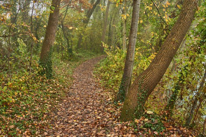 Waldweg im Herbst | Sony A7 III | Sony 24–105mm f4 | 35mm | f/16 | 1/40sec | ISO-2000