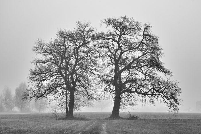 Bäume im Nebel | Sony A7 III | Sony 24–105mm f4 | 55mm | f/8 | 1/125sec | ISO-100