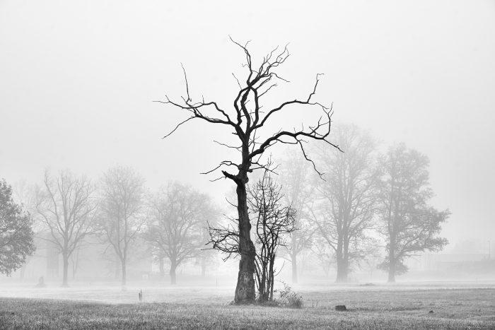 Bäume im Nebel | Sony A7 III | Sony 24–105mm f4 | 105mm | f/8 | 1/100sec | ISO-100